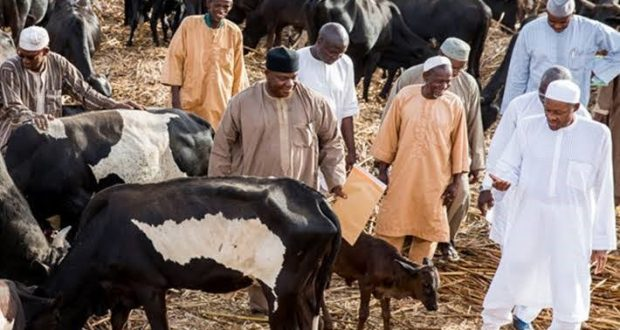 Why Anger Trails Buhari's Visits To Daura Cows Instead of Kankara school