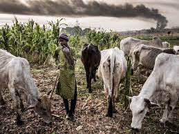 Why Nigerians Go To Bed Hungry – Agric Minister