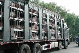 Kaduna Bans Inward, Outward Transportation Of Livestock